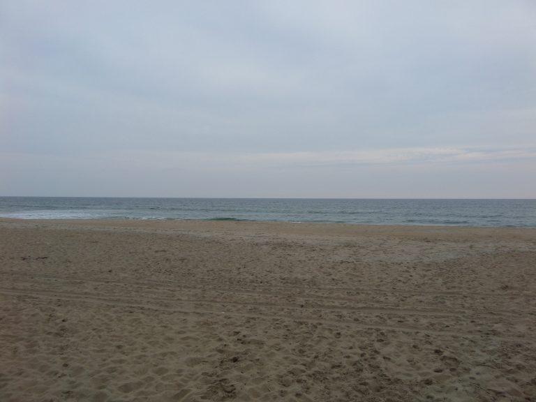 obxrental_beach_seaurchininn